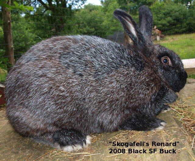 Silver Fox Rabbits